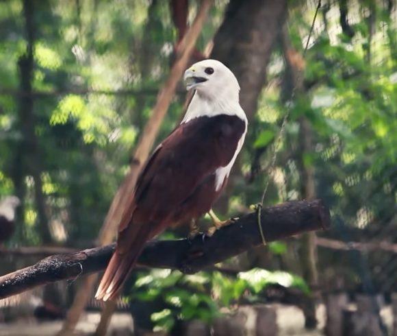 Roofvogel rehabilitatie