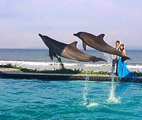 Red de dolfijnen
