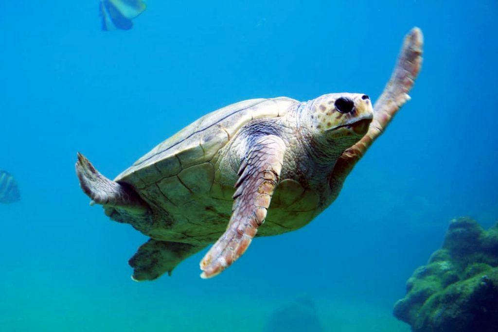 Bescherming van zeeschildpadden