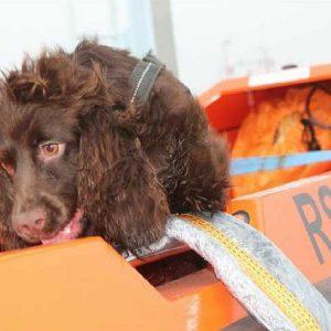 Hond Bailey gaat wilde dieren redden in Indonesië