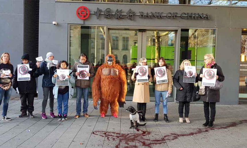 Actie voor Orang Oetan: soort dreigt uit te sterven door bouw hydro-dam