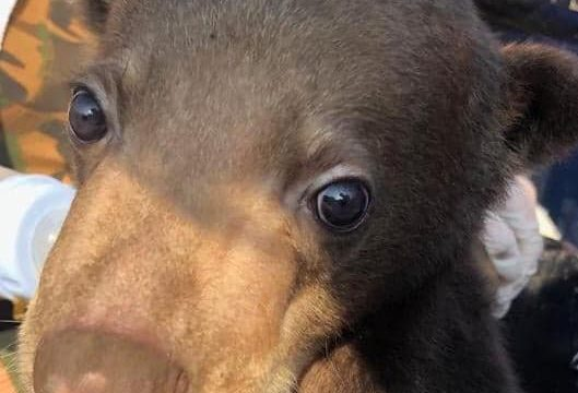 JAAN redt baby beer uit illegale dierenhandel